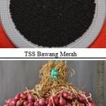 Teknologi TSS, Cara Mudah Bertanam Bawang Merah