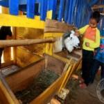 Konsumsi Rendah, Jabar Masih Bertekad Jadi Provinsi Domba