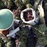 Kementan Siapkan Insentif Rp37,5 Juta/ Hektar untuk Petani Bawang Merah