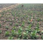 Atasi Krisis Petani Muda, PISPI Adakan Rembug Nasional